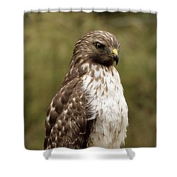Dark Beauty Shower Curtain by Phill Doherty