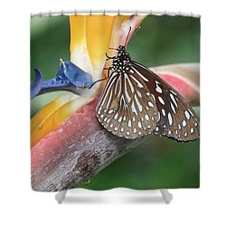 Shower Curtain featuring the photograph Dark Blue Tiger Butterfly - 1 by Paul Gulliver