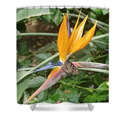 Shower Curtain featuring the photograph Dark Blue Tiger Butterfly - 2 by Paul Gulliver