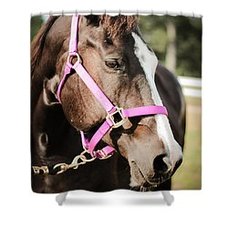 Shower Curtain featuring the photograph Dark Brown Horse In A Pink Bridle by Kelly Hazel