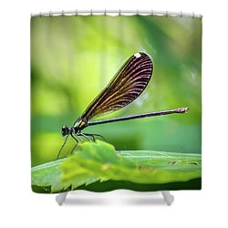 Shower Curtain featuring the photograph Dark Damsel by Bill Pevlor