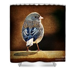 Dark-eyed Junco 2 Shower Curtain