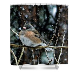 Dark-eyed Junco During A Snowfall Shower Curtain
