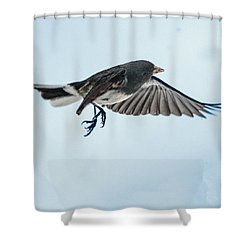 Dark-eyed Junco Flying Shower Curtain