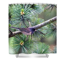 Dark-eyed Junco On A Pine Tree Shower Curtain by David Gn