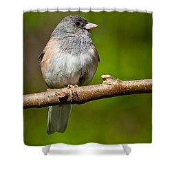 Dark Eyed Junco Perched On A Branch Shower Curtain