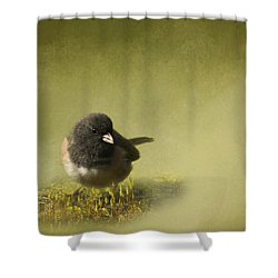 Shower Curtain featuring the photograph Dark-eyed Junko by Inge Riis McDonald