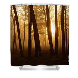Dark Forest Shower Curtain by Terri Gostola
