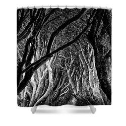 Dark Hedges Kings Road Shower Curtain