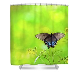Shower Curtain featuring the photograph Dark Morph Female Tiger Swallowtail Butterfly by Lori Coleman