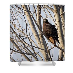 Shower Curtain featuring the photograph Dark-morph Western Red-tailed Hawks by Ricky L Jones