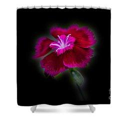 Dark Pink Dianthus Shower Curtain by Donna Brown