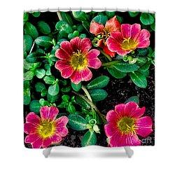 Dark Pink Purselane Flowers Shower Curtain