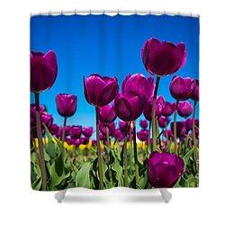 Dark Purple Tulips Shower Curtain by John Roberts