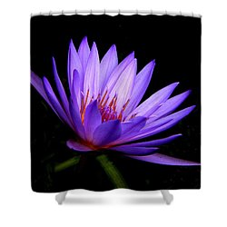 Dark Side Of The Purple Water Lily Shower Curtain