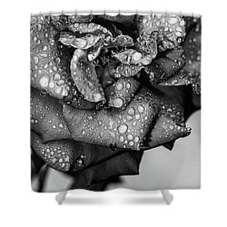 Shower Curtain featuring the photograph Dark Wet Rose by T Brian Jones