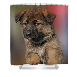 Shower Curtain featuring the photograph Darling Puppy by Sandy Keeton