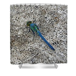 Darter Shower Curtain