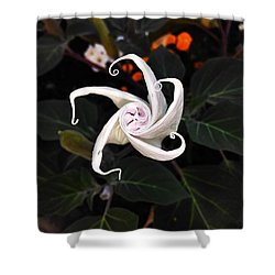 Datura Bud  Shower Curtain