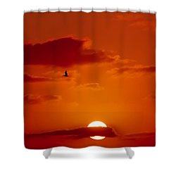 Dawn Flight Shower Curtain by DigiArt Diaries by Vicky B Fuller