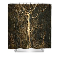 Day Break Tree Shower Curtain