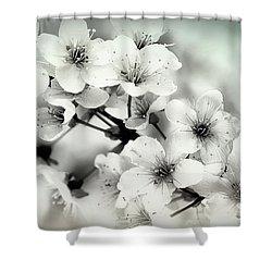 Shower Curtain featuring the photograph Day Dreams by Darlene Kwiatkowski
