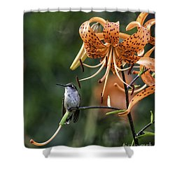 Day Hummer Shower Curtain