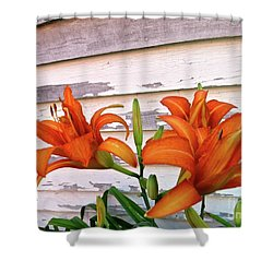 Day Lilies And Peeling Paint Shower Curtain