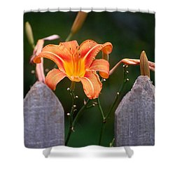 Day Lilly Fenced In Shower Curtain by David Lane