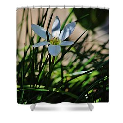 Shower Curtain featuring the photograph Day Lily Or Hemero - Callis by Craig Wood