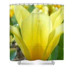 Daydreaming Of Yellow Tulips Shower Curtain