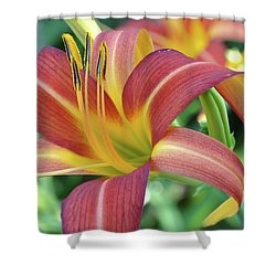 Shower Curtain featuring the photograph Daylilies At Daybreak by Rebecca Overton