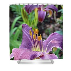 Shower Curtain featuring the photograph Daylilies In Purple by Rebecca Overton