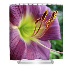 Shower Curtain featuring the photograph Daylilies In Summer by Rebecca Overton