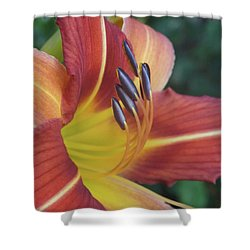 Shower Curtain featuring the photograph Daylilies Orange by Rebecca Overton