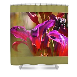 Daylily Abstract Colors - Beauty In The Garden Shower Curtain