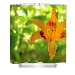 Daylily Shower Curtain by Charles Ables