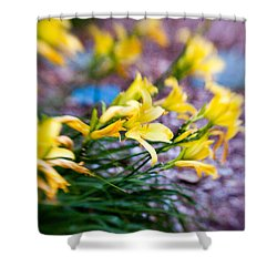 Shower Curtain featuring the photograph Daylily by Erin Kohlenberg