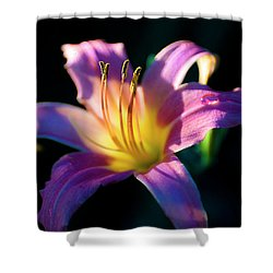 Daylily Glow Shower Curtain by Tamyra Ayles