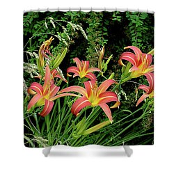 Daylily Grouping Shower Curtain