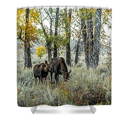 Shower Curtain featuring the photograph Day's End At Gros Ventre by Yeates Photography