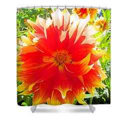 Dazzling Dahlia Shower Curtain