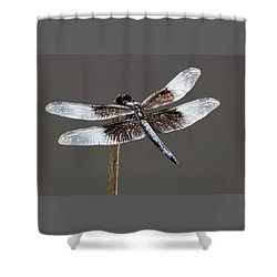 Dazzling Dragonfly Shower Curtain