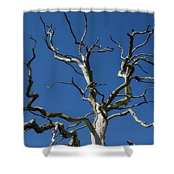 Dead Oak Tree Shower Curtain