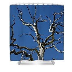 Dead Oak Tree Shower Curtain by Kennerth and Birgitta Kullman