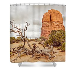Dead Tree Arches Shower Curtain