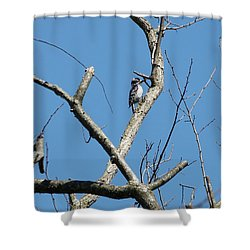 Dead Tree - Wildlife Shower Curtain by Donald C Morgan