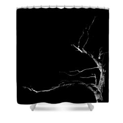 Dead Tree On Black Background Shower Curtain