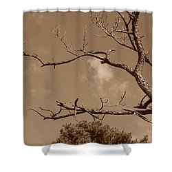 Dead Wood Shower Curtain by Rob Hans