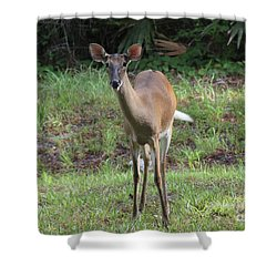 Deer Friend Shower Curtain by Dodie Ulery